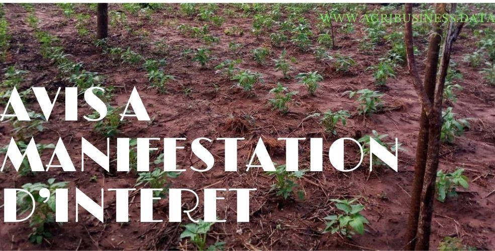 Recrutement d'un consultant/Cabinet par le Ministère de l'Agriculture