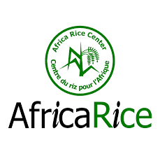 AfricaRice rectrute un Assistant(e) de recherche en production de semences-17/05/2021