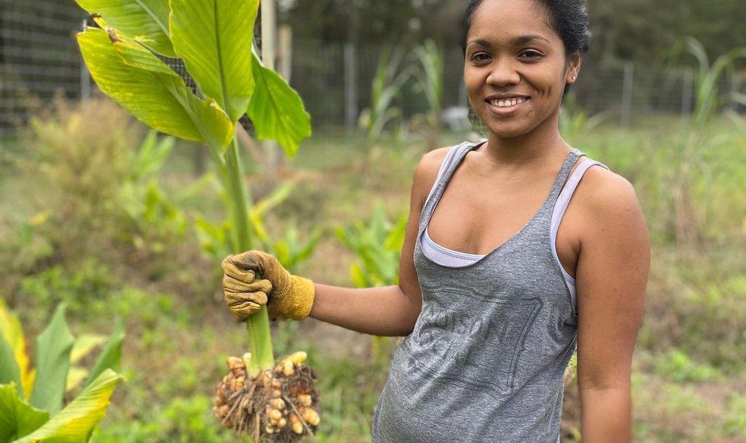 Agriculture – Filière Gingembre