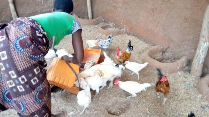 Le petit élevage domestique : Avantages et pratique